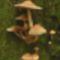 Gombák