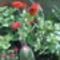 rézvirág+kaktusz