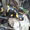szalamandra a patakparton