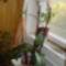 virágok 001