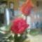 Kép0851