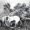 A lópatkolása 1950 Császárrét