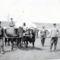 Bivalyok járatása és takarmányozás Császárrét 1950