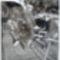 Lópatkolás 1950 Császárrét