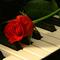 rózsazongorán