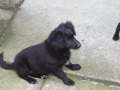 Stella kicsikorában
