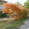 Bálvány fa
