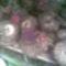 Csodagumók telelnek(terméseivel)