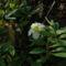 A tél virága