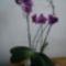 lepkeorchidea 6