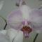 lepkeorchidea 9