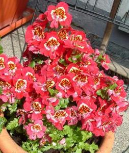 lepkevirág_6