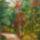 őszi erdő kicsi