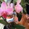 Lepke Orchidea közelröl