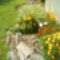 Kertem és virágaim 21