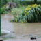 árvíz 4