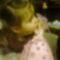 3 éves lettem