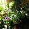 Szobanövények napfénybe