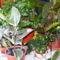 Vegyes szobanövények