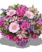 1295419_4207_profile