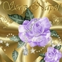 237648_79375_card