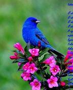 494441_39008_profile